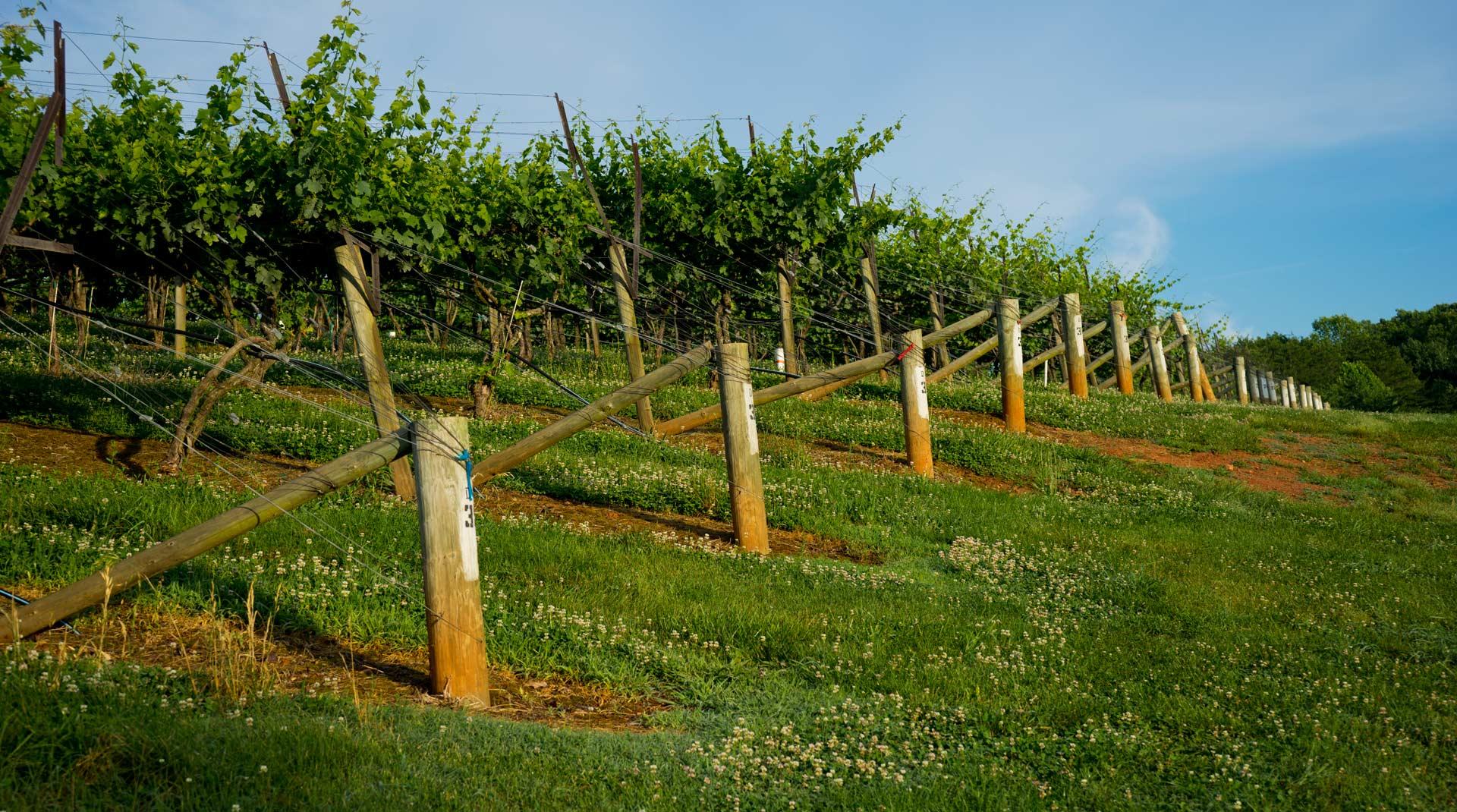 Dahlonega Winery Bed And Breakfast