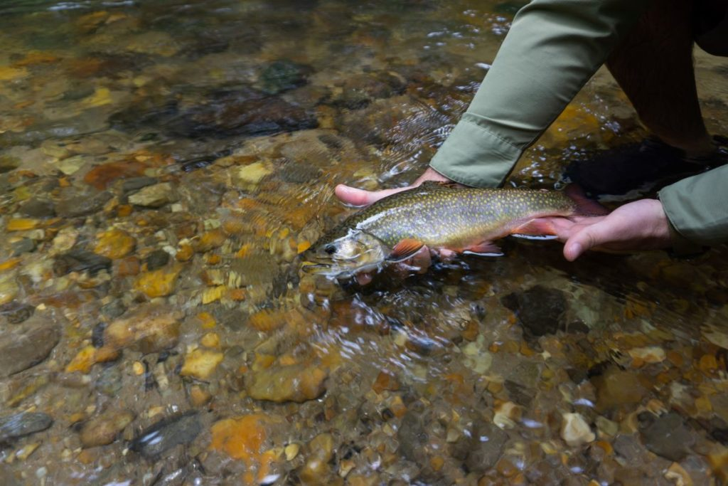 Fly Fishing in Dahlonega: Q&A with Expert Guide Daniel Bowman